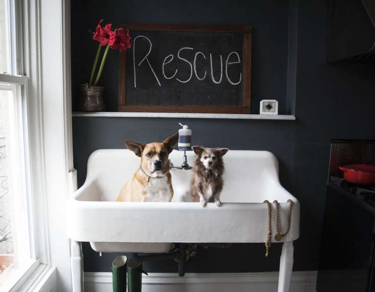 Bethany Obrecht, co-owner of dog accessories company Found My Animal and a rescue dog advocate, equipped her Brooklyn brownstone kitchen with an antique farmhouse double sink, purchased on eBay and sized right for Claude, her mutt, and Henri, her Chihuahua. Photograph courtesy of Found My Animal.