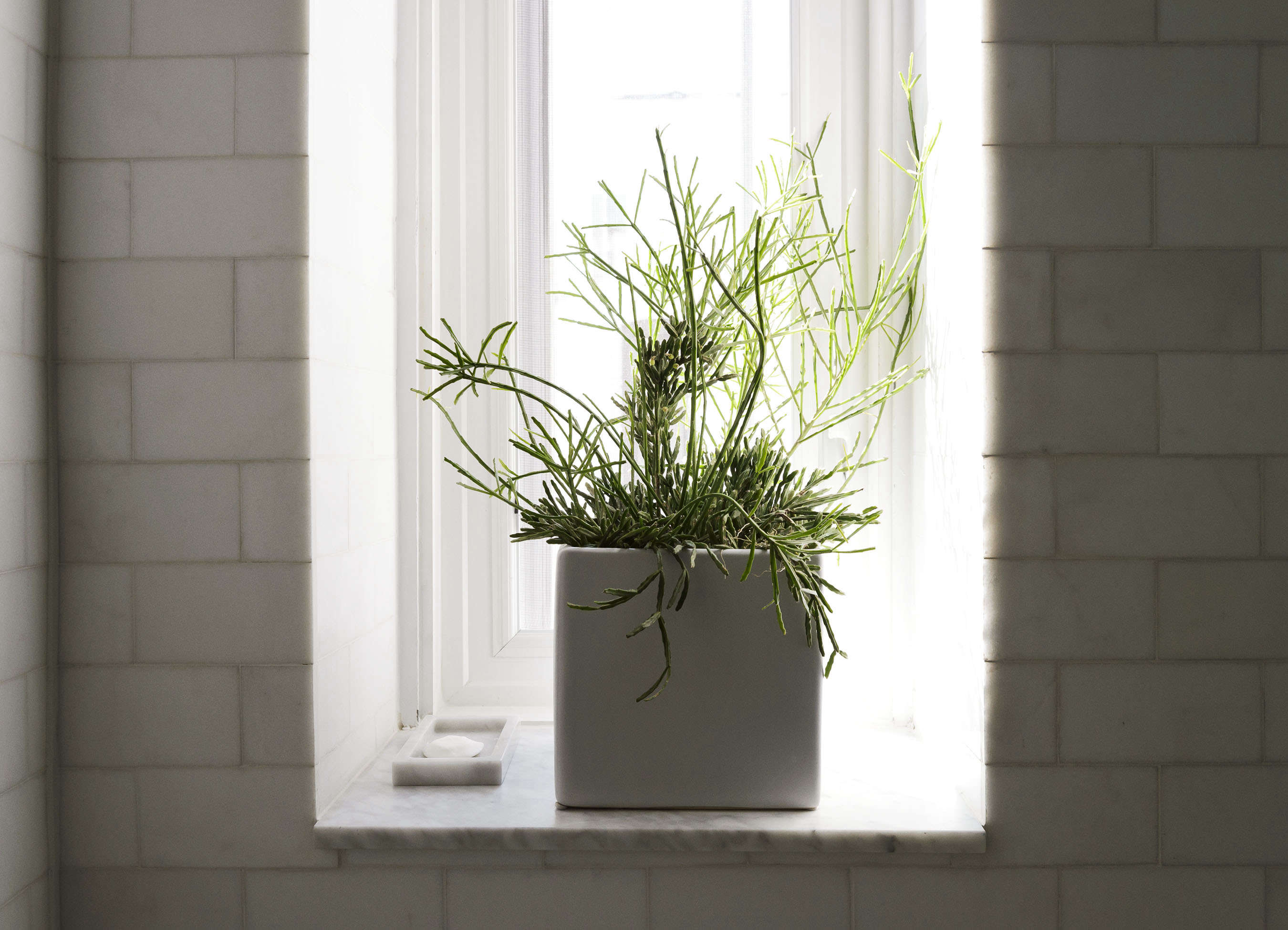 Plant on bathroom windowsill in Jacqueline-Schmidt and David Friedlander's 675-square-foot Brooklyn quarters, Matthew-Williams-photo | Remodelista