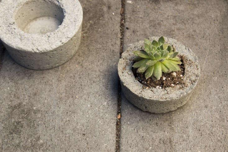 diy-concrete-planters-budget-gardenista-733x489
