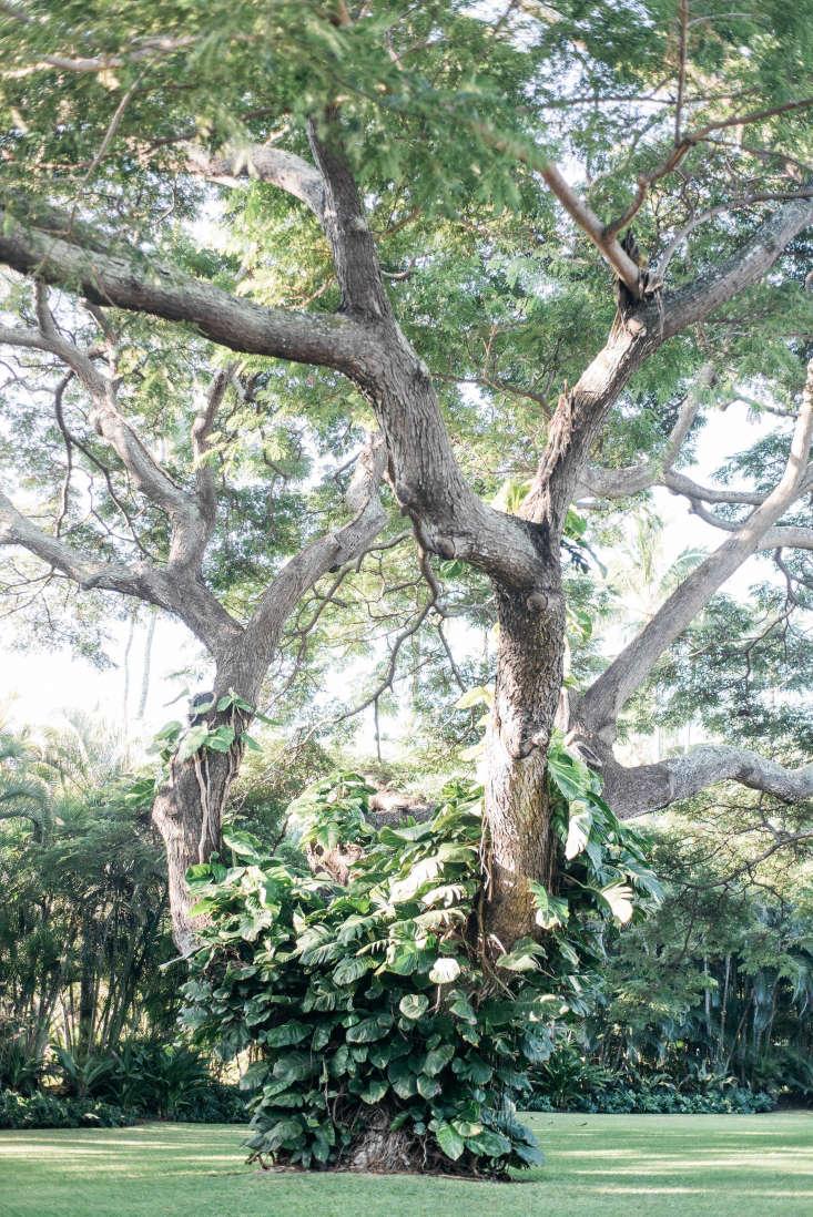 Roberto Sosa Hawaii Gardens Tree