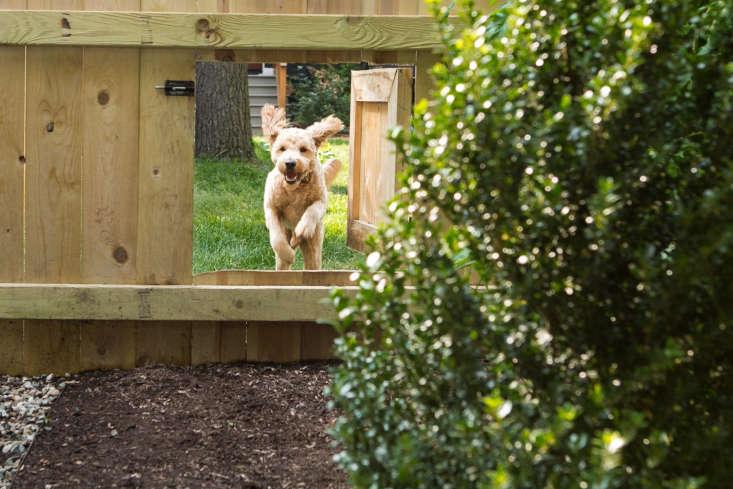 dog door fence by Marta Xochilt Perez
